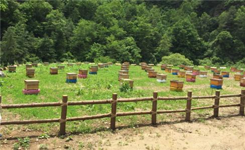 黎坪镇龙山村蜂养殖基地建设项目